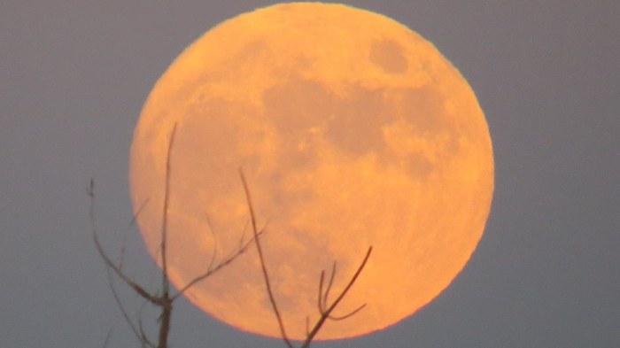 Randy moon three