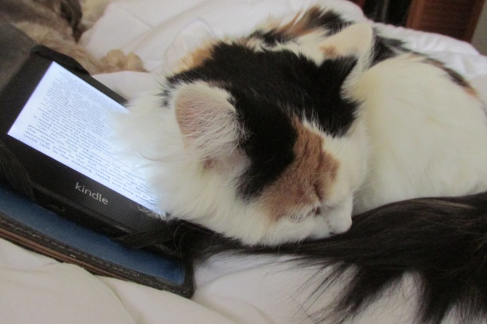 I think she imagines the Kindle is warm, like the laptop  But she insists on sleeping on the Kindle when she gets a chance.