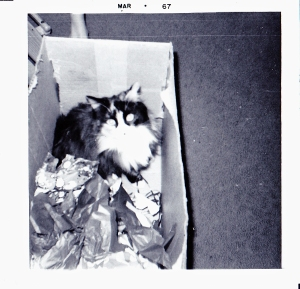 My cat Tippy in a box, which makes me wonder what cats did before cardboard?
