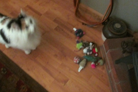 all the toys... she does not put them away.  We haven't even looked under the fridge yet.