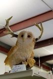 While I own a jackalope, the Horned Owl is native to New Hampshire.  I need to get one of these.