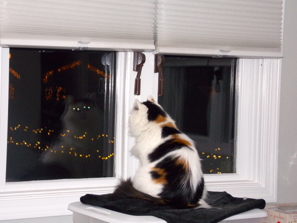 Holiday lights for are kitties to watch! Shiny and bright is irresistible for Moxie! She spend hours here every evening.